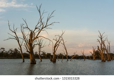 Natural Backwater setting on the River Murray South Australia, late evening nature background in landscape orientation. Colorful sky and clouds over ghost gums.