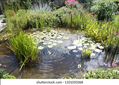 Natural backyard water pond with water plants and small water fountain