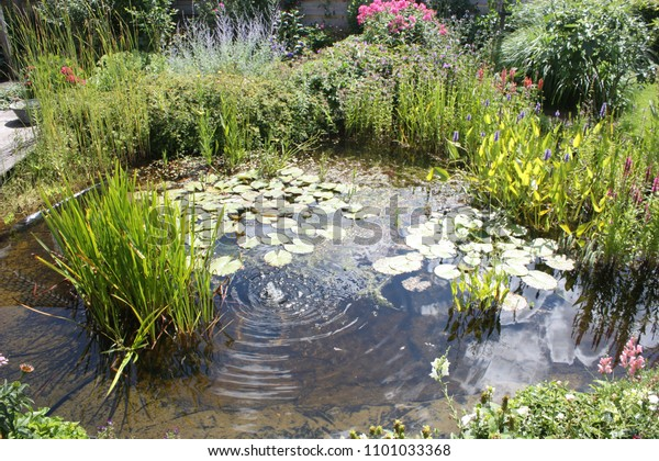 Natural Backyard Water Pond Water Plants Stock Image ... on about me design ideas, home staging design ideas, backyard pond liner ideas, backyard walls ideas, backyard construction ideas, backyard pond projects, backyard sod ideas, backyard drainage ideas, backyard grading ideas, lifestyle design ideas, backyard goldfish pond ideas, backyard gardening ideas, backyard home ideas, backyard fountains ideas, patio design ideas, backyard ponds and waterfalls ideas, yard pond ideas, travel design ideas, home and garden design ideas, family design ideas,