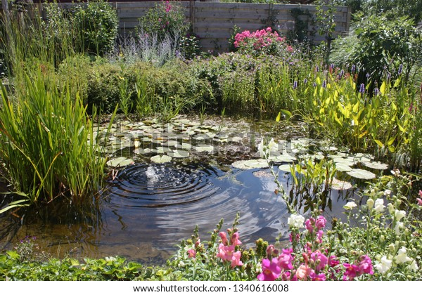 Natural Backyard Water Pond Water Plants Stock Photo Edit Now