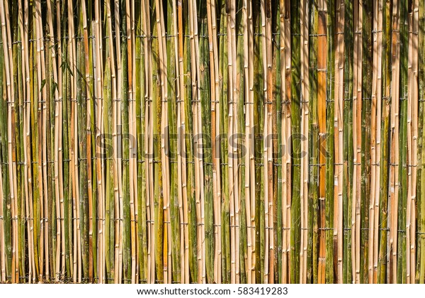 Natural bamboo fence with high type.