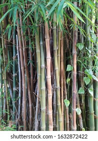 Natural bamboo texture with leaf