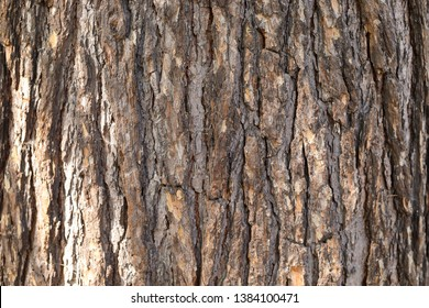Natural Bark of Mature Tree Trunk with Flecks of Sunlight. Beautiful Raw Material. Wood Background with Copy Space.