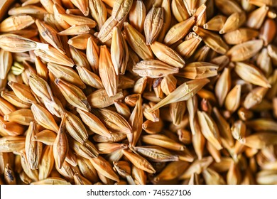 Natural barley grains for background