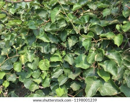 Natural Beautiful Green Wallpaper Mobile Desktop Stock Photo Edit