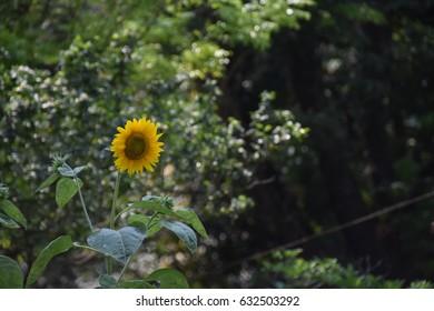 Natural Beauty of Bangladesh - Flower Garden