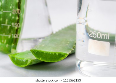 Natural beauty products and plant based clinical treatment concept with macro close up on an aloe vera plant leafs in a chemistry flask isolated on white background