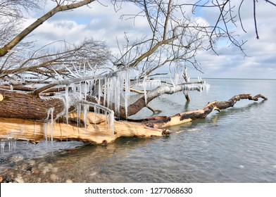 The natural beauty of winter ice sickles dangling from the branches of a fallen tree. The tree lies in the clear and frigid waters along the coast of Lake Michigan in southeast Milwaukee, Wisconsin.