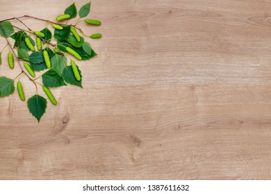 Natural birch twig with leaves and Spring birch catkins on wooden table, natural eco-friendly products background, flat lay, copy space