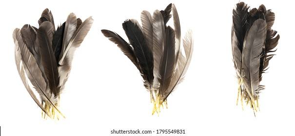 Natural bird feathers isolated on a white background. collage pigeon, goose  and chicken feathers close-up.stack bird feathers
