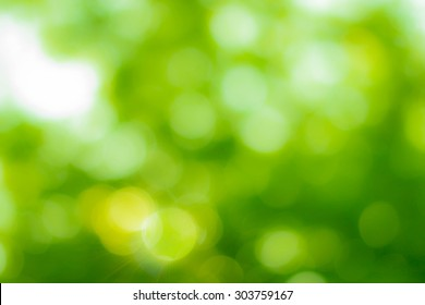 Natural blurred bokeh background from leaf and tree.