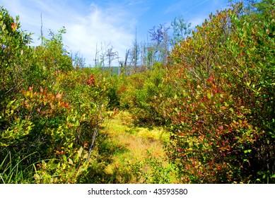 Natural bog environmental area
