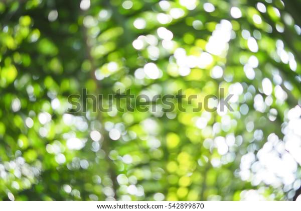 Natural Bokeh blurred background