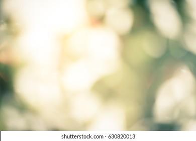 Natural Bokeh sun rays green lights abstract