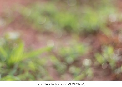 Natural Bokeh,blurred background.