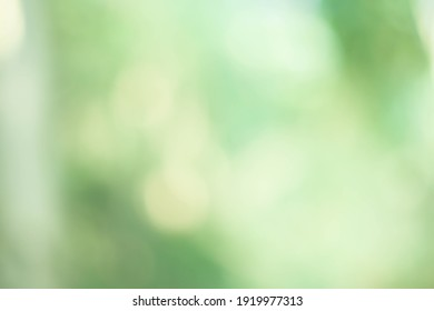 Natural bokeh.blurred photo Natural green trees Lawn and trees green background.