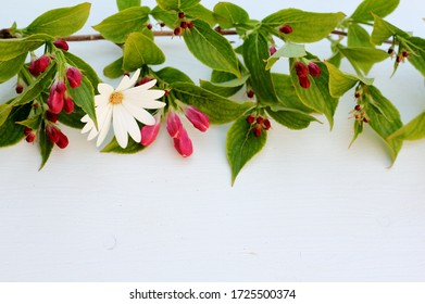 A natural border of a spring blossom bough and a daisy on a white wooden background with copy space . A green , white and pink floral image .