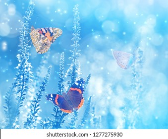 Natural bright background with butterflies on wildflowers. Beautiful butterflies on blue blurred background
