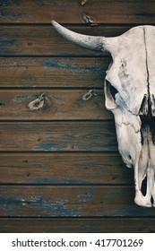 natural bull's skull with antlers closeup