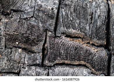 Natural burned carbonised charred wood surface, high quality texture