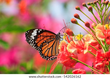 Natural Butterflies Flowers Stock Photo Edit Now 542026162