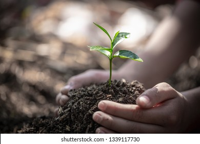 Natural care concepts and world preservation, global warming reduction. World Environment Day.