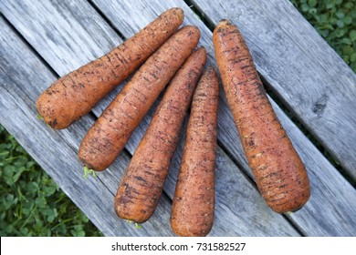 Natural carrots on a grey wooden table. Green grass background. Top view. Horizontal.  Daylight