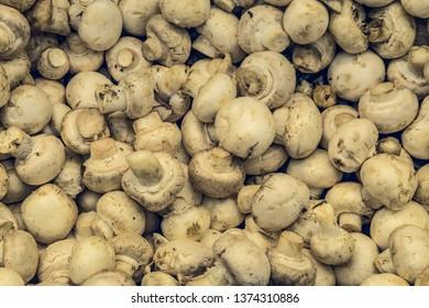Natural champignon mushrooms in market. Top view.