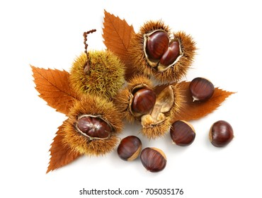 natural chestnuts with chestnut leaves isolated