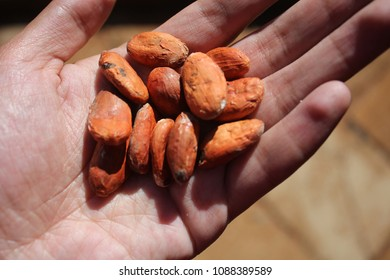 Natural cocoa bean for chocolate recipes