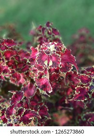 Natural colerful petals