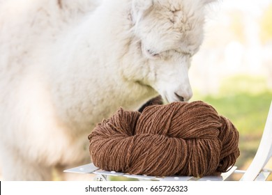 Natural color alpacas wool yarn with alpaca background