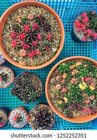 natural colorful cactus for decoration in basket top view