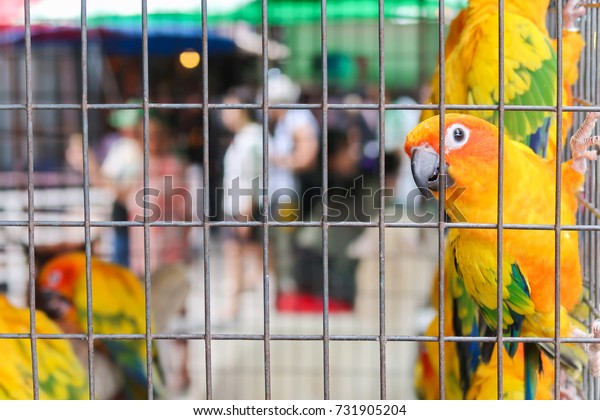 natural colorful parrot in cage at zoo