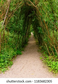 Natural covered walking path in the gardens at Blarney Castle, Blarney, Ireland