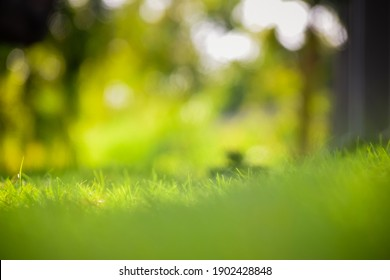 Natural defocused blurry background of lawn with bokeh.