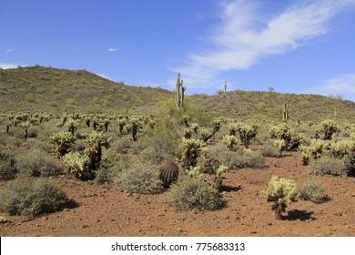 Natural Desert Mountain Landscape Cholla Saguaro Barrel Cacti Blue Sky