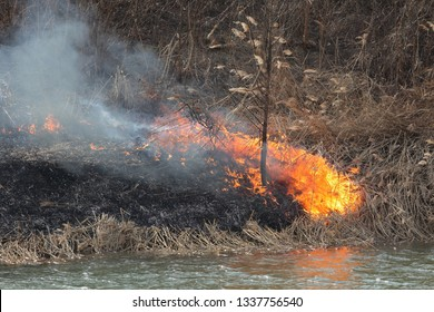 Natural disaster, fire destroying cane grass and bush at riverbank in marsh
