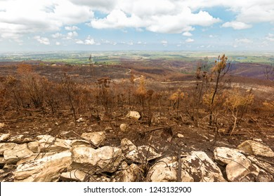 natural disaster as a result of run away outdoor forest and bush fires the landscape reflects the resultant devastation