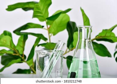 Naturmedikamentforschung, Pflanzenextraktion in wissenschaftlichen Glaswaren, Alternative Grüne Kräutermedizin, Natürliche organische Hautpflegeprodukte, Labor- und Entwicklungskonzept.