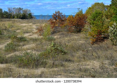 Natural dunes along the shore of the Great Lake Michigan with the water and horizon in the distance.