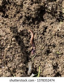 natural earth and worm, earth and worm, natural hefty worm,