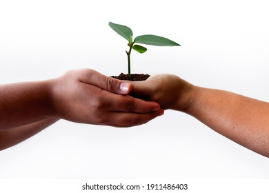 natural environment, earth day concept. Growing plant in Kids hands over white background