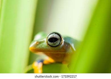 Natural exotic frog