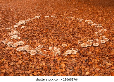 Natural fairy ring of mature fungus among beech leaves in Autumn