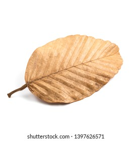 Natural fallen dry leaf isolated on white background