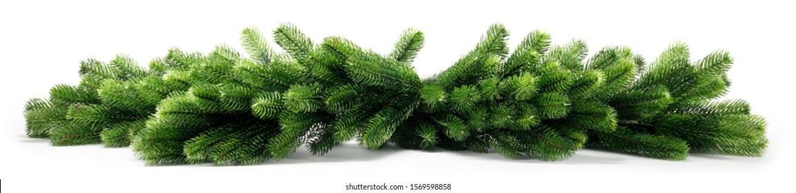 Natural fir Christmas tree branches isolated on white background , stripe, border, frame design element for Christmas card