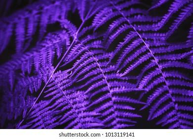 violet color images stock photos vectors shutterstock