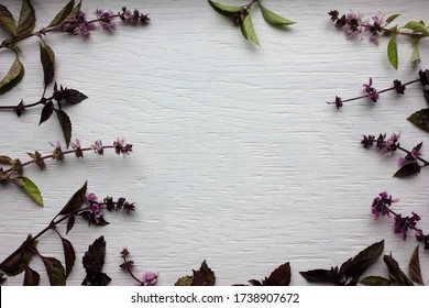 Natural floral frame from fresh purple basil leaves and flowers on a white wooden background with copy space. Top view.