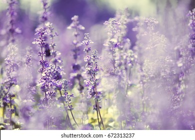 Natural flower background.